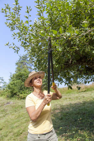 Woman gardener with straw hat cutting back tree branches in organic orchard, on sunny afternoon photo