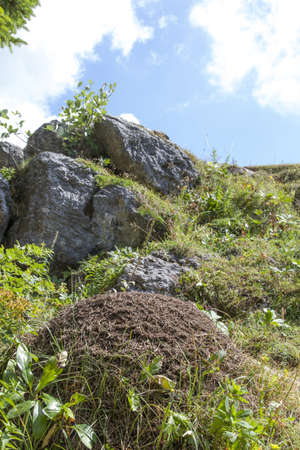 anthill: Big anthill in the mountains, selective focus on anthill Stock Photo