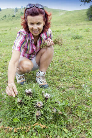 Smiling woman picking, gathering herbs high in the mountain Stock Photo - 21493321