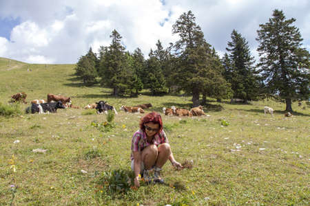Smiling woman picking herbs on pasture, high in the mountain Stock Photo - 21604899