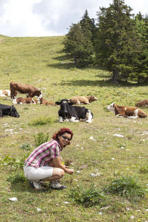Smiling woman picking herbs on pasture, high in the mountain Stock Photo - 21604903