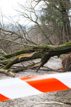 storm damage: Road closed with safety ribbon, uprooted trees blocked forest road,after sleet storm