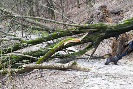 surprised dog: Surprised dog under uprooted trees after storm Stock Photo