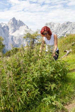 stinging  nettle: Cute smiling woman picking stinging nettle leaves  high in the mountains. Healing with wild herbs and plants Stock Photo