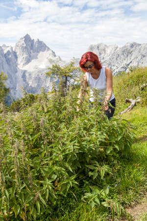 pokrzywka: Cute uśmiechnięta kobieta zbieranie liści pokrzywy wysoko w górach. Uzdrowienie z dzikich ziół i roślin Zdjęcie Seryjne