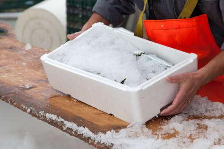 Fischer abdeckt frische Sardinen mit Eis, vor dem Transport Standard-Bild - 32729579