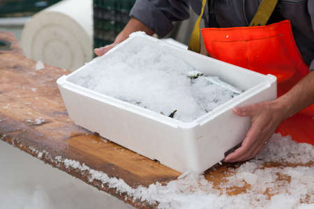 Fishermen covering fresh sardines with ice, before the transport photo