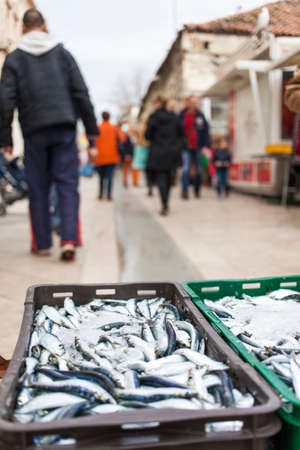 Fresh sardines in box, on market street, prepared for sale, selactive focus on sardines, dof photo