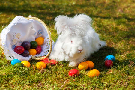 rabbit sitting on grass with basket of colorful easter eggs