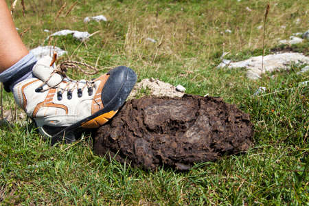 trample: Human boot stepping on cow shit lying on mountain path near signpost, close-up Stock Photo