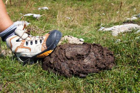 Human laars intensivering op koeienstront liggend op bergweg in de buurt van bord, close-up Stockfoto