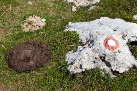 shit: Cow shit on the mountain path near rock with sign post, close-up