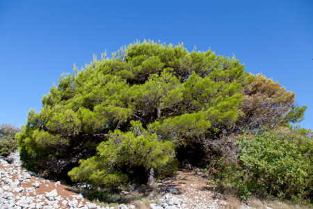 kornati national park: Beautiful Mediterranean maquis and herbs in Kornati national park, paradise islands, archipelago in Dalmatia, Croatia, space for text, high resolution photo
