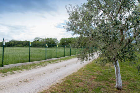 traps: View on a large organic olive grove, surrounded with wire fence, with natural insect traps in plastic bottles