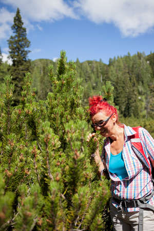 sniffing: Pretty mid aged woman sniffing pine tree high in the mountains. Selective focus