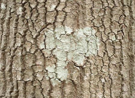 lichen and bark