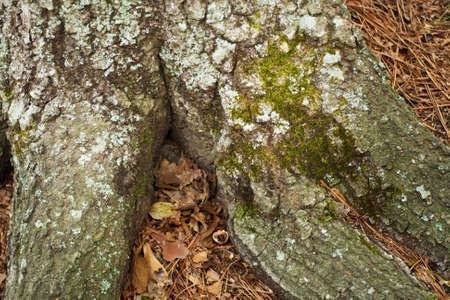 moss on tree bark Imagens