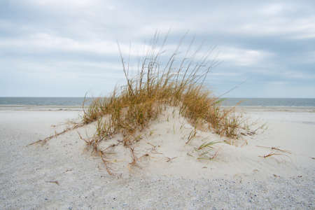 sand dune Imagens - 10911167