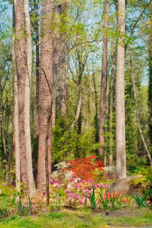 colorful suburban flora Imagens - 10911182