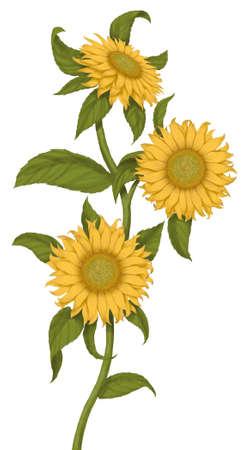 dun: sun flowers