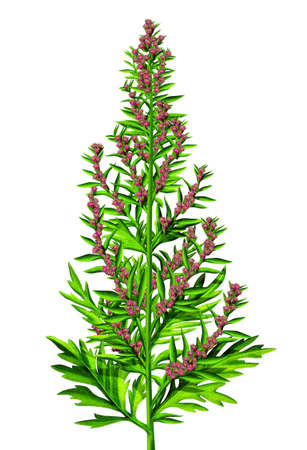 thrive: Green plant with red pink flowers