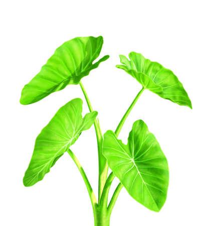 thrive: Green plant  Stock Photo
