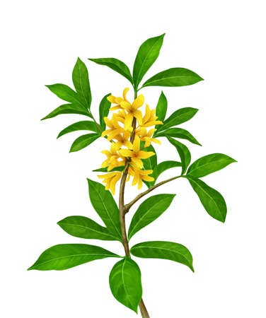 greenness: Green plant with yellow flowers