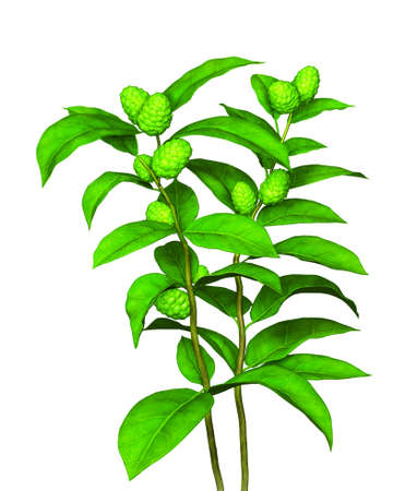 thrive: Green plant with fruit and seed