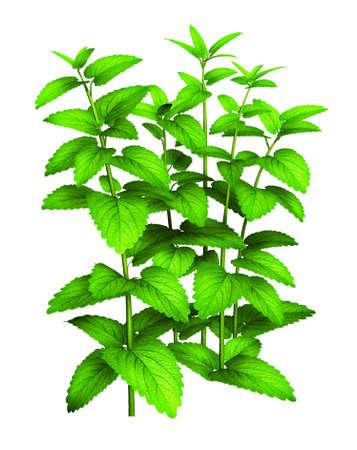 planter: Tall green plant