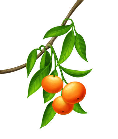 thrive: Green plant with orange - red fruits