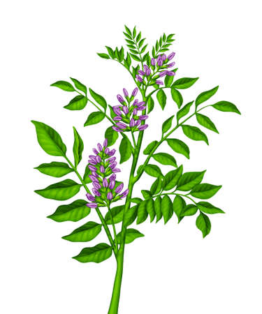 greenness: Green plant with purple pink flowers Stock Photo