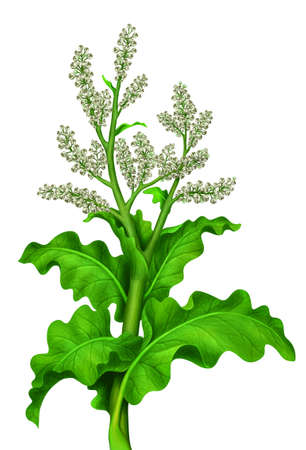 thrive: tall green plant with beige flowers  Stock Photo