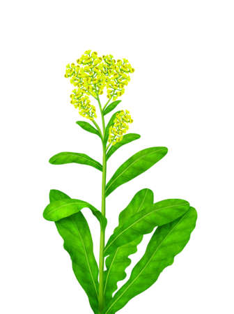 thrive: leaf with yellow flowers