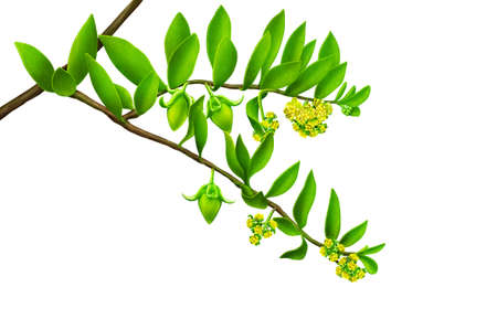 greenness: green leaf with yellow flowers Stock Photo