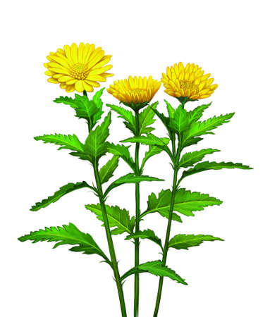greenness: Green plant with big yellow flowers