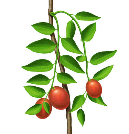 greenness: green plant with red fruits  Stock Photo