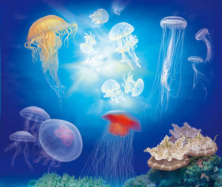 jelly fish: jellyfish (medusa) and coral reefs on the seabed with blue sea background Stock Photo