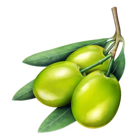jujube fruits: Illustration of fresh jujube isolated on white
