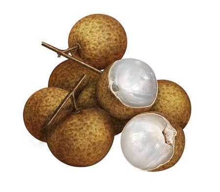 llustration of fresh longan isolated on white background H20