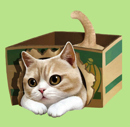 A illustration of Cat playing in a box