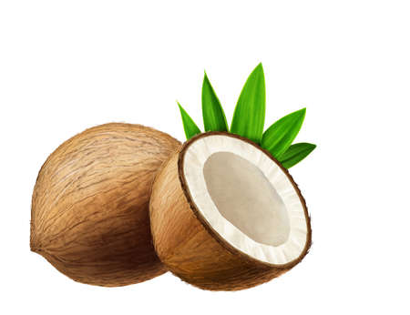 Juicy fresh Coconuts with white background
