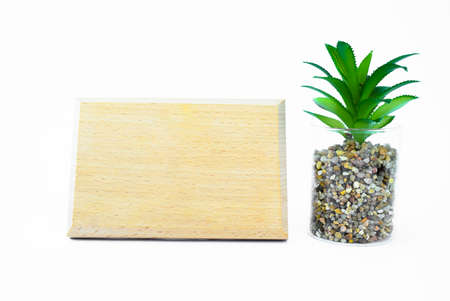 A completely blank wood plaque template beside a miniature green tree with white background