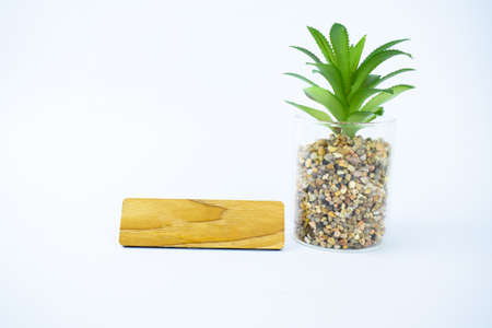 A blank wooden name plate beside a miniature fresh green tree on an isolated white background