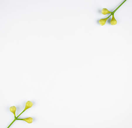 Two small white flower buds with three white buds each on a white isolated background