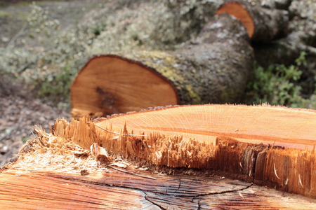serrated: Tree trunk cut serrated by mans hand Stock Photo