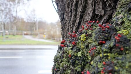 Tree at springtime with little growing branches standing besides an unfocused blurry overexposed street. Stock Photo