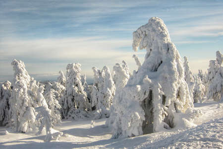 Winter Landscape with Frozen Snow Covered Trees and Cloudy Sky
