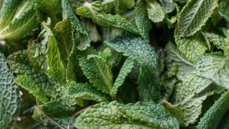 Natural fresh green mint leaves closeup shot Stock Photo