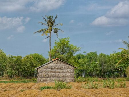 Simple wooden bamboo shed in front of a tall tree, a forest and the blue sky with some clouds. Stock Photo