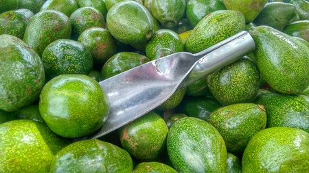 Avocados Bunch of fruits, ripe avocado with metal scoop in bunch of fruits Stock Photo